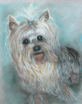 Yorkie by Judie White