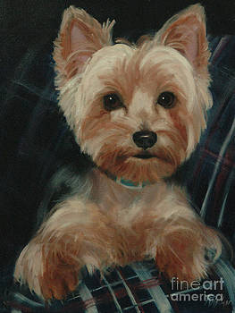 Yorkie on Couch by Pet Whimsy  Portraits
