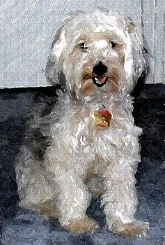 Yorkipoo Dog by Olde Time  Mercantile