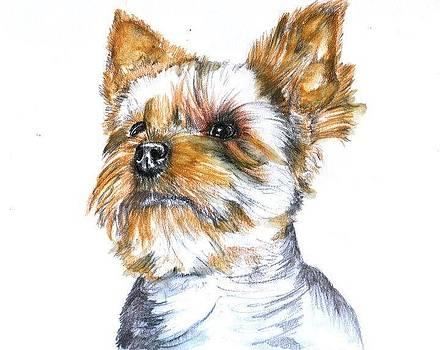 Yorkshire Terrier 2 by Aida Novosel Savic