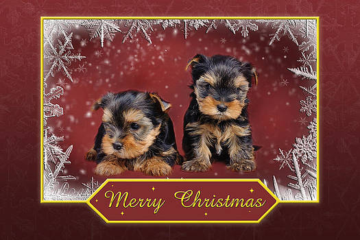 Waldek Dabrowski - Yorkshire terrier Christmas card