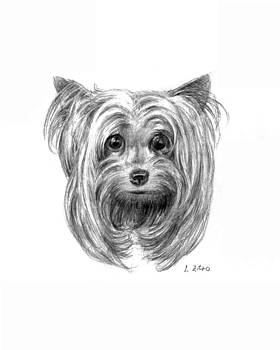 Yorkshire Terrier by Lou Ortiz