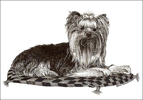 Jack Pumphrey - Yorkshire Terrier on checkered pillow