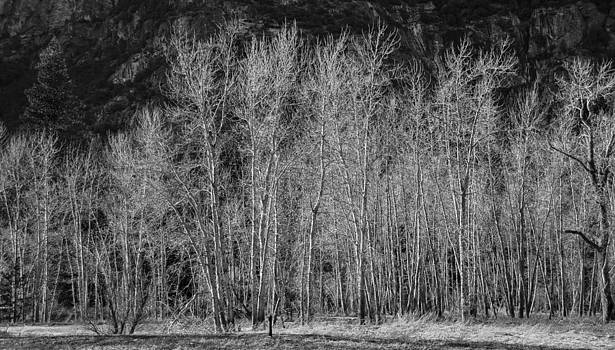 Yosemite Aspens by Michael Newcomb