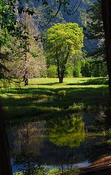 Yosemite National Park  by Mischelle Lorenzen