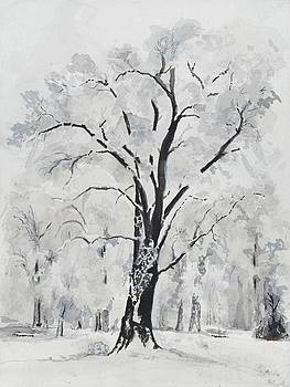 Yosemite Tree by Jean Moule