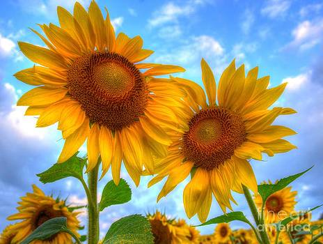 You are my Sunshine by Debbi Granruth