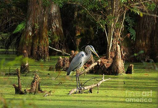 Young Blue Heron by Theresa Willingham