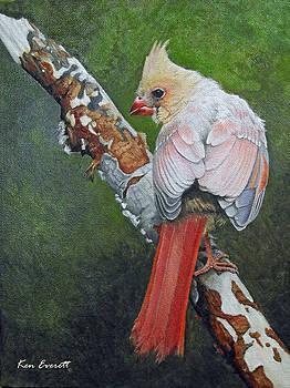Young Cardinal  by Ken Everett