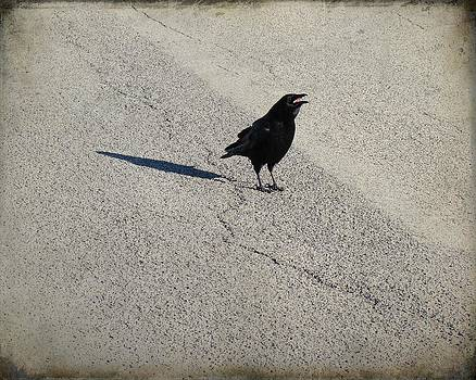 Gothicrow Images - Young Cawing Crow