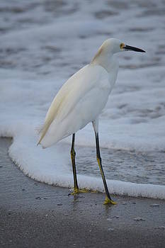 Patricia Twardzik - Young Egret in the Surf