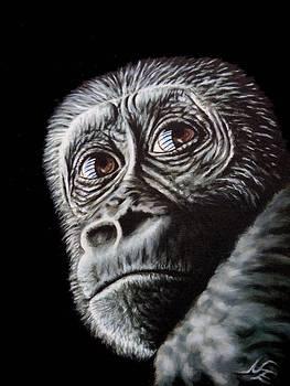 Young Gorilla by Nicole Zeug