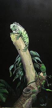 Young iguana and tody by Greg Neubert