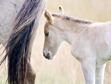 Young Konik Horse by Fun Cards
