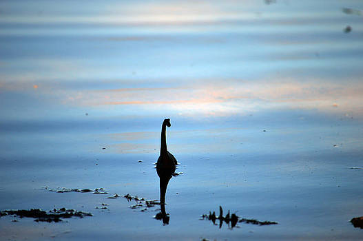 Young Lake Seamonster  by Timothy Thornton
