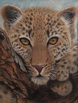 Young Leopard by Anne Kerr