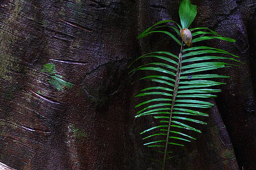 Palm Leaf Against Tree by August Timmermans
