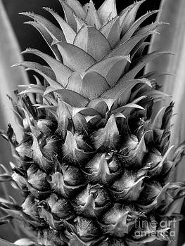 Young Pineapple by Ranjini Kandasamy