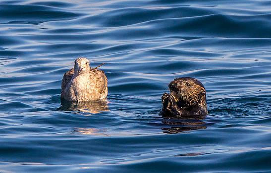Randy Straka - Young Sea Otter