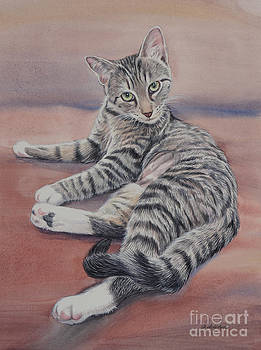 Young Tabby Cat by Gail Dolphin