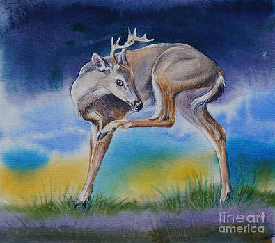 Young Whitetail Buck by Gail Dolphin