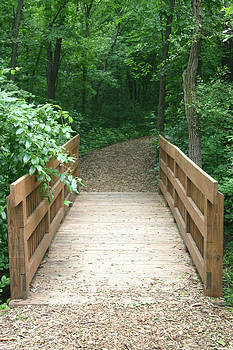Your Path by Brenda  Peters