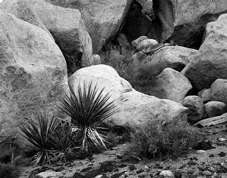 Christian Slanec - Yucca and white Boulder Nevada