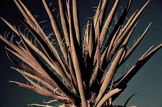 Yucca9 by Lee Scott