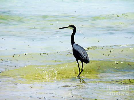 Zanzibar bird by Giorgio Darrigo