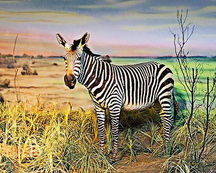 Walter Herrit - Zebra 1