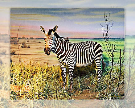 Walter Herrit - Zebra 2