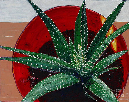 Barbara Griffin - Zebra Cactus in Red Glass