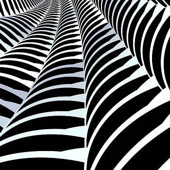Zebra by Csongor Licskai