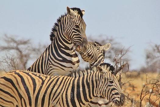 Hermanus A Alberts - Zebra Dominance