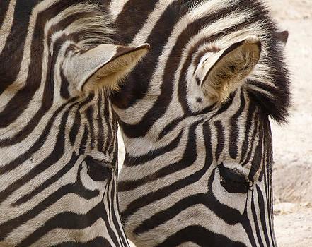 Margaret Saheed - Zebra Double