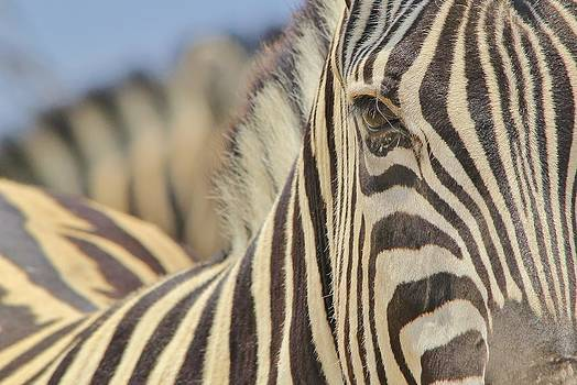 Hermanus A Alberts - Zebra Eye