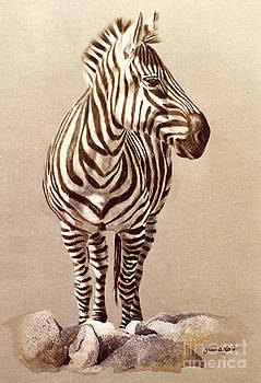 Zebra by Gail Dolphin