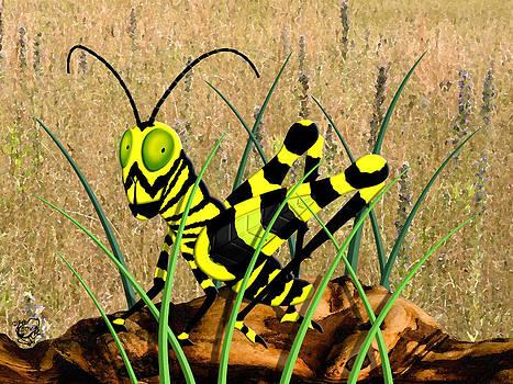 Zebra Grasshopper by Stephen Kinsey