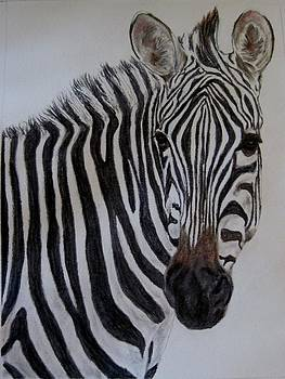 Zebra by Joan Pye