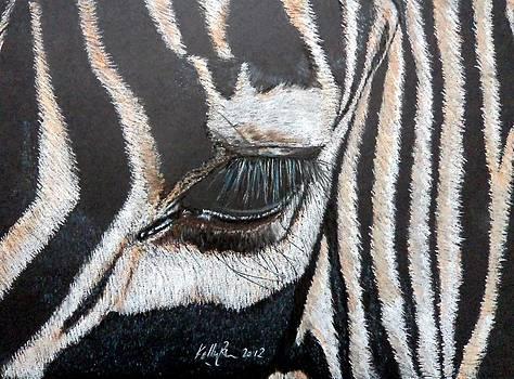 Zebra by Skyrah J Kelly