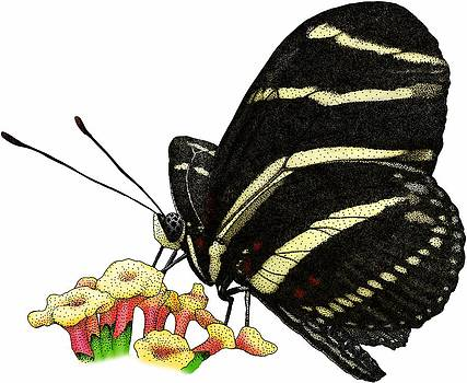 Zebra Longwing Butterfly by Roger Hall