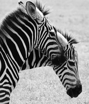 Paulette Thomas - Zebra Love Black and White