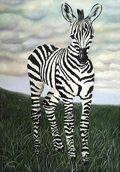 Zebra by Megan Morris Collection
