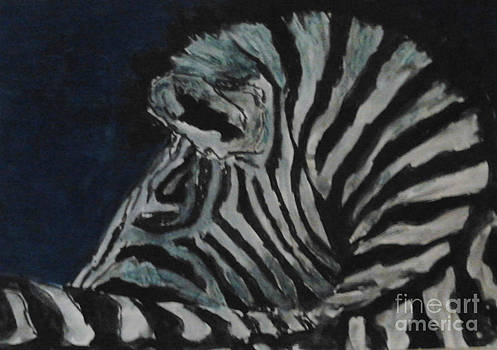Zebra by Patries Van Dokkum