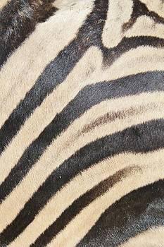 Hermanus A Alberts - Zebra Pattern