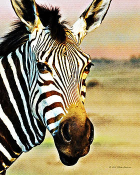 Walter Herrit - Zebra Portrait 1