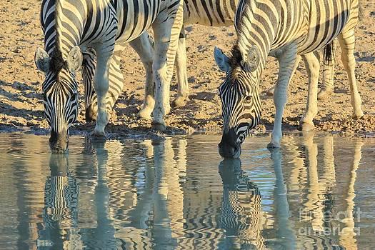 Hermanus A Alberts - Zebra Reflection