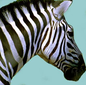 Samantha Radermacher - Zebra