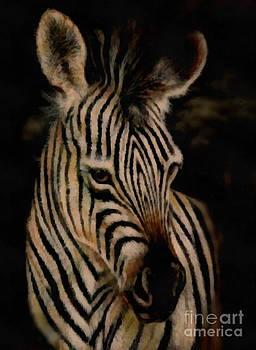 Scott B Bennett - Zebra
