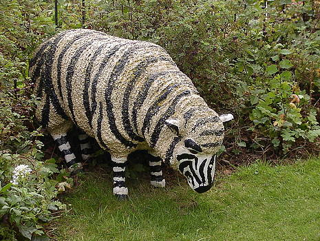 Zebra Sheep by Fred Whalley